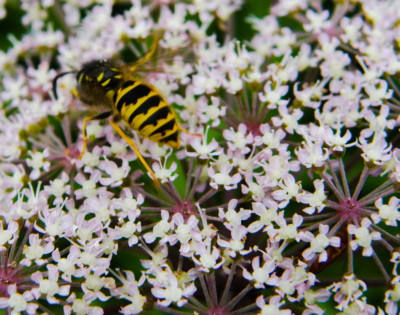 Animal Themes Animal Wildlife Animals In The Wild Beauty In Nature Close-up Day Flower Flower Head Fragility Freshness Garden Garden Flowers Garden Photography Growth Insect Nature No People One Animal Outdoors Plant Pollination Pollinators