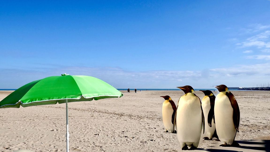 Cut And Paste Searching For Snow Beach Sand Nature Different Perspective Mix Your World Nature Sky Sea Vacations Beauty In Nature Day Water Summer Outdoors Blue Penquins Umbrella Green Umbrella Beach Photography Beach Life Global Warming Break The Mold Sommergefühle