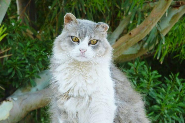 Greece Cats Animals