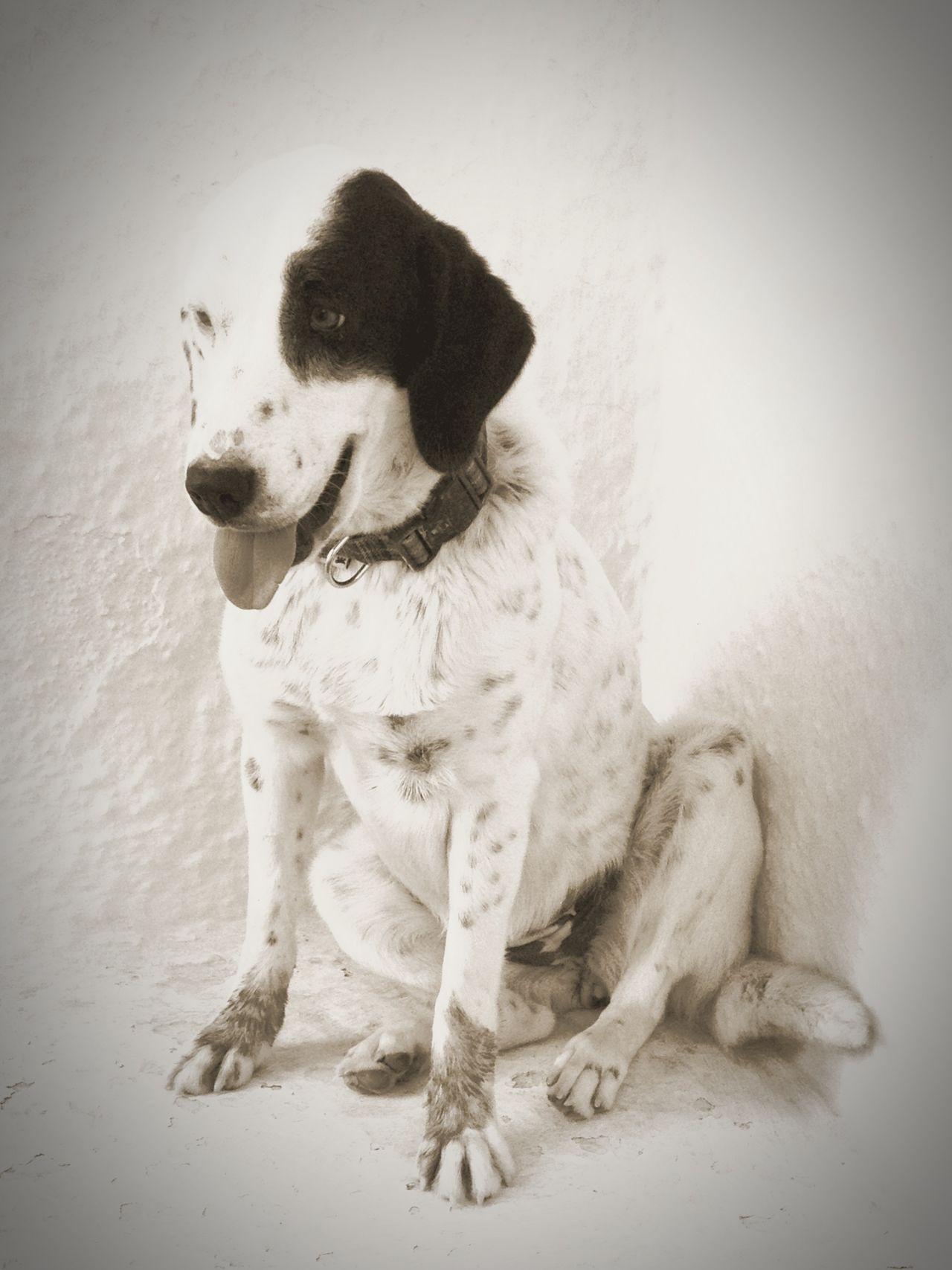 Dogs Dog Love Santorini, Greece Karterados