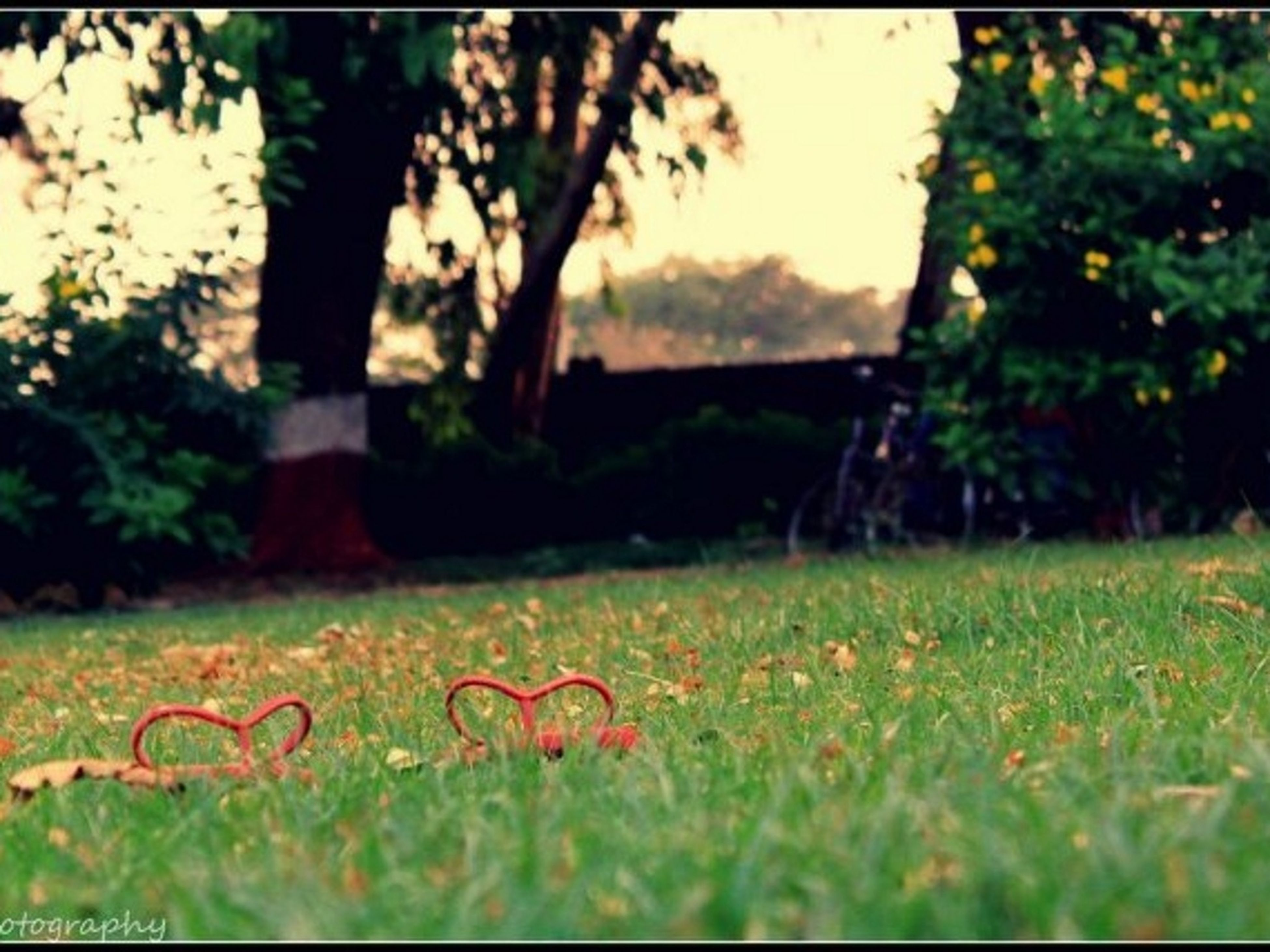 grass, grassy, field, growth, green color, tree, selective focus, nature, tranquility, focus on foreground, landscape, lawn, beauty in nature, tranquil scene, surface level, plant, park - man made space, no people, meadow, day