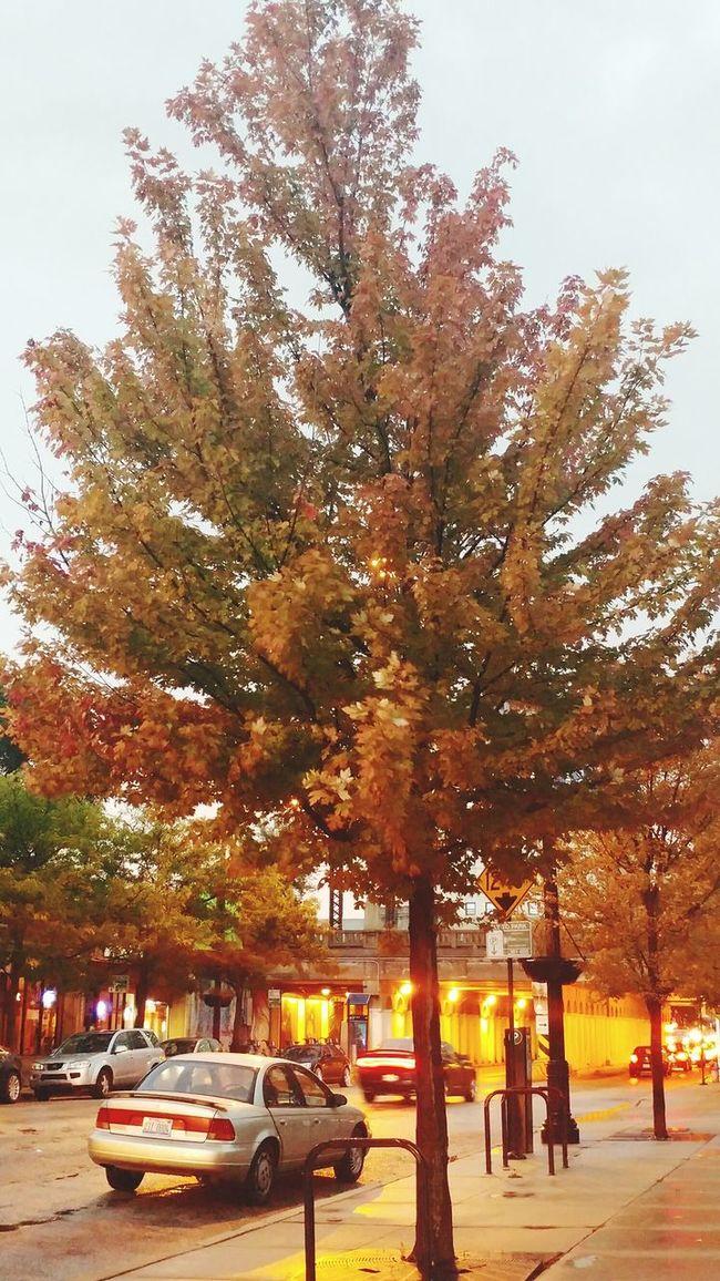 Tree Transportation Autumn Change Multi Colored Scenics City Life Nature Weather Rainy