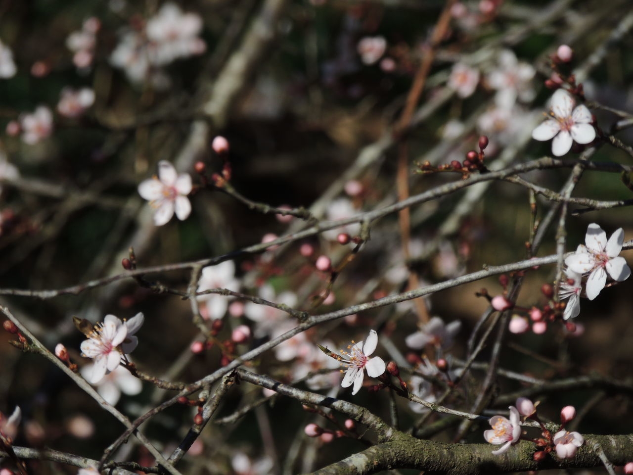 flower, nature, growth, branch, tree, beauty in nature, twig, no people, blossom, fragility, day, outdoors, springtime, freshness, close-up