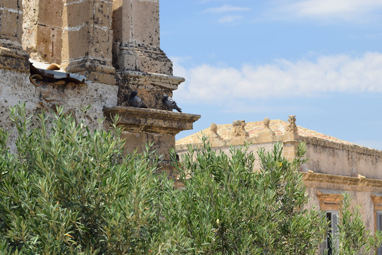 idyllic landscape with old Sicilian Palazzo and pigeons on the roof of a church Architecture Built Structure Cityscapes Green Color Landscape_Collection Nature Old City Old Palace Olive Trees Olives Outdoors Pigions Sicily SICILY 2016 - Series Sicily Landscape Sicily, Italy