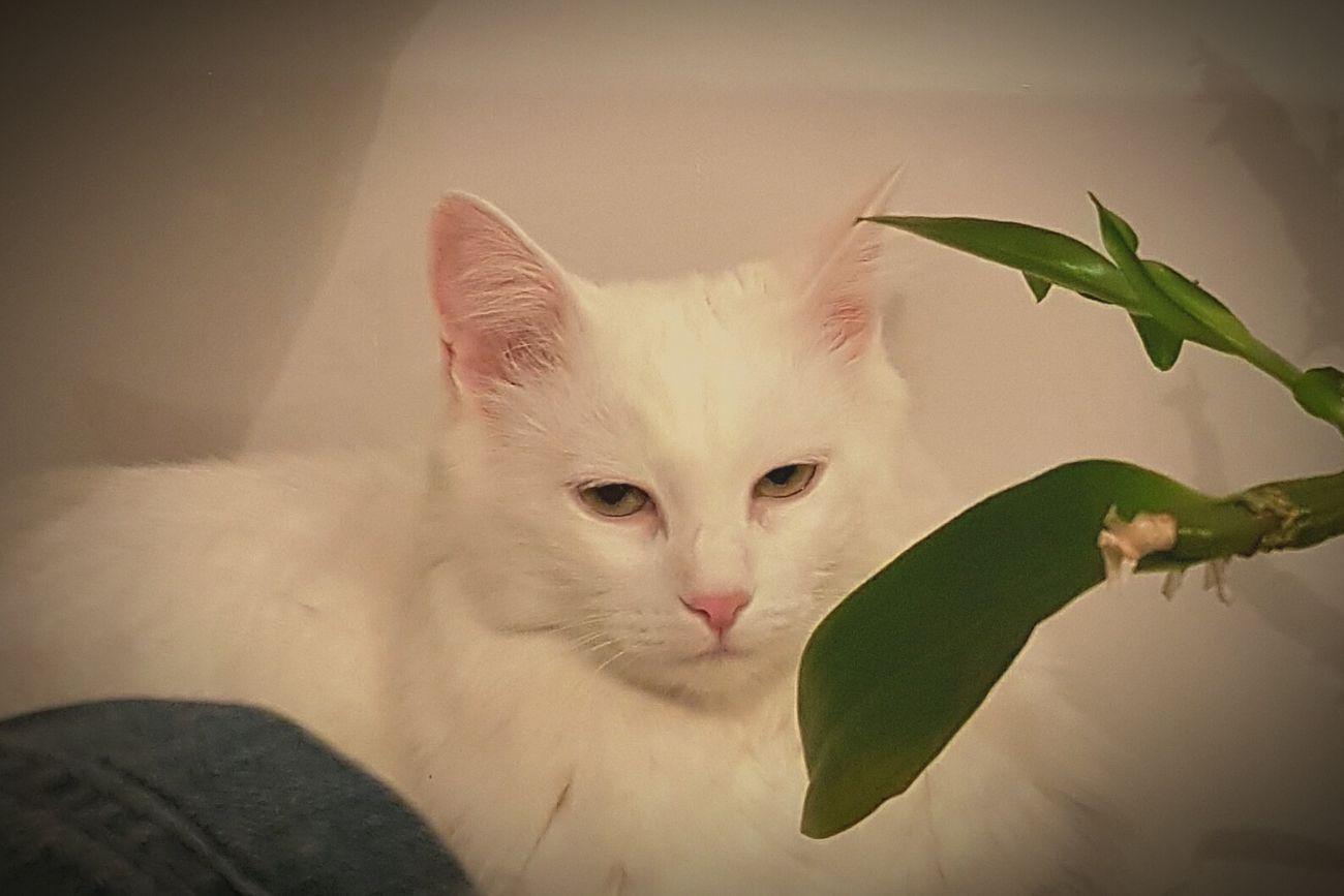Moonlight Emilie's Cat Moonlight The Deaf Cat Boring Times