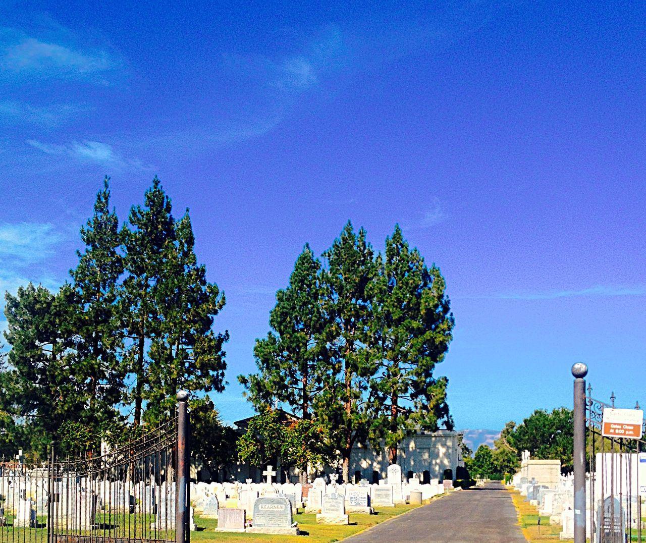 Cemetary 2 Cemetary Trees Grass Sky Gravestones Wrought Iron Gate