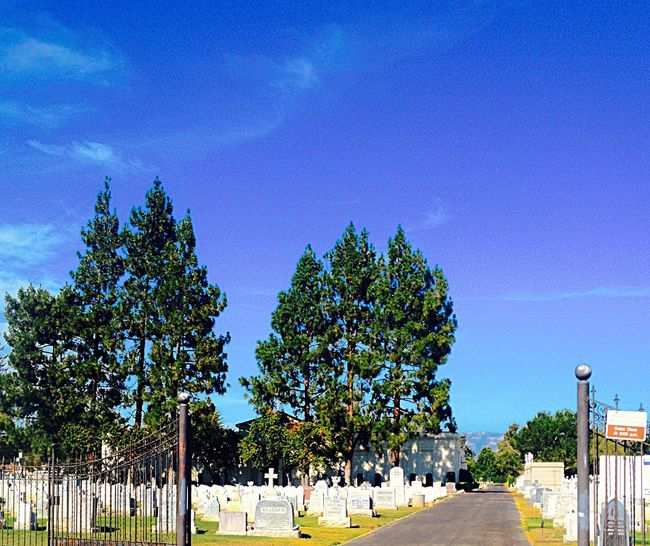 Cemetary 2 Cemetary Trees Grass Sky Gravestones Wrought Iron Gate