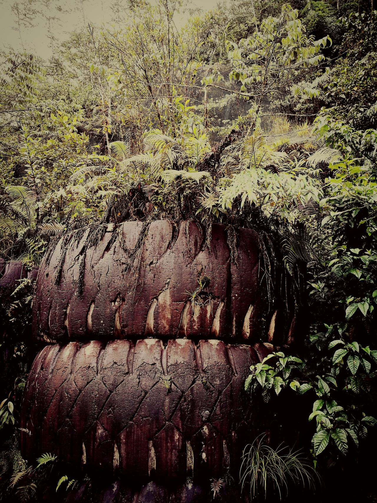 The jungle growing out of tyres Jungle No People Nature Tree Outdoors Mountain Tembagapura Tyre