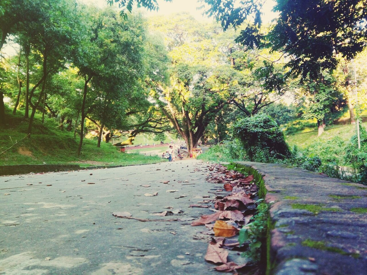 Tree Footpath Leaf Nature Beauty In Nature First Eyeem Photo