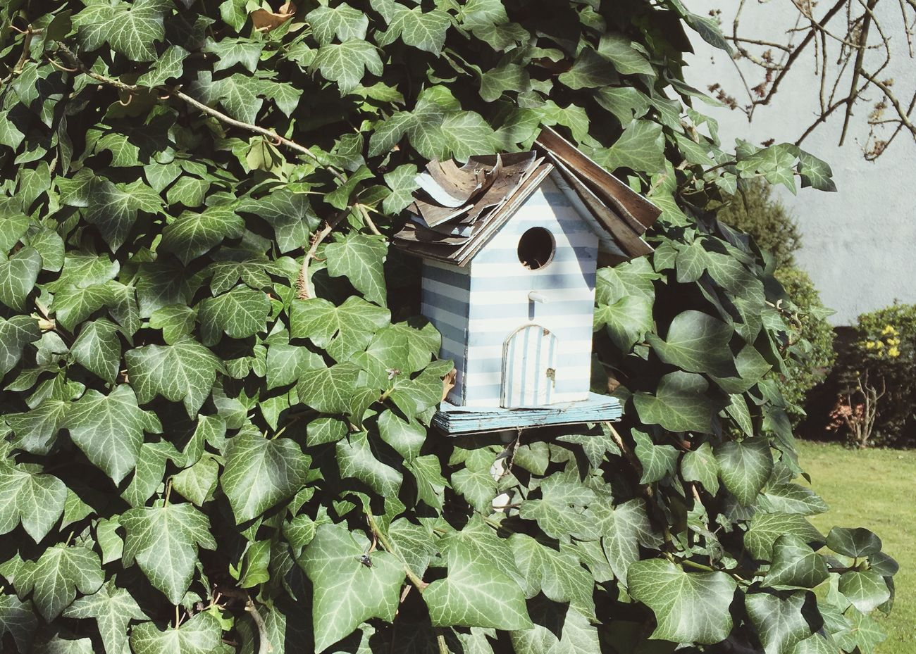 Iphonese Birdhouse Birdhome Living Architectural Detail Leaves