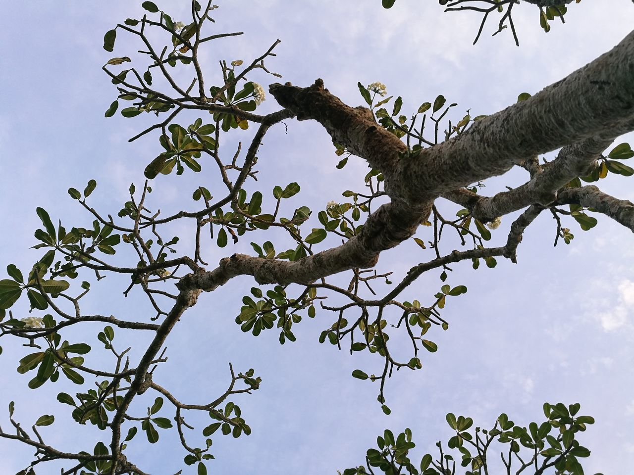 tree, branch, low angle view, day, sky, nature, outdoors, no people, animal themes, animals in the wild, leaf, growth, beauty in nature, perching, bird