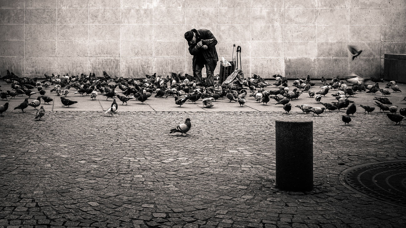 The Portraitist - 2016 EyeEm Awards ''generosite'' Homeless Pigeons Paris Lokee