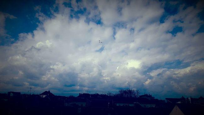 #birds #Blue #clouds  #romania #rooftop #sky Cloud - Sky Landscape Nature No People Outdoors