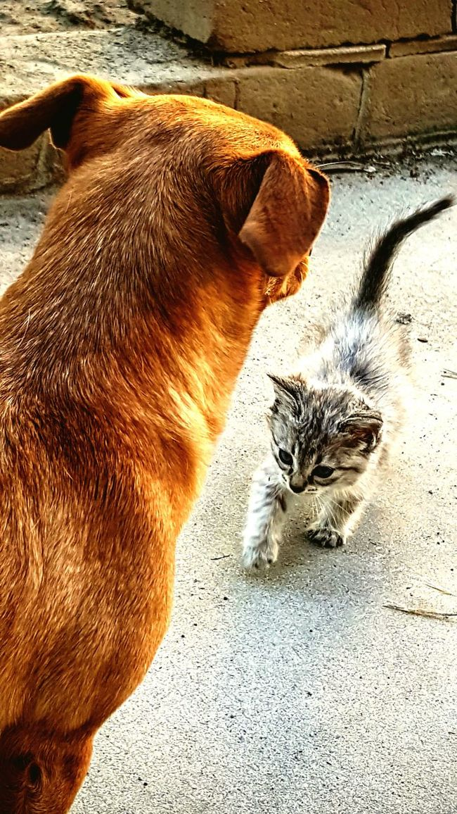 Cat Dog Red Dog Kitten Playmates Perspective Colour Of Life Home Is Where The Art Is