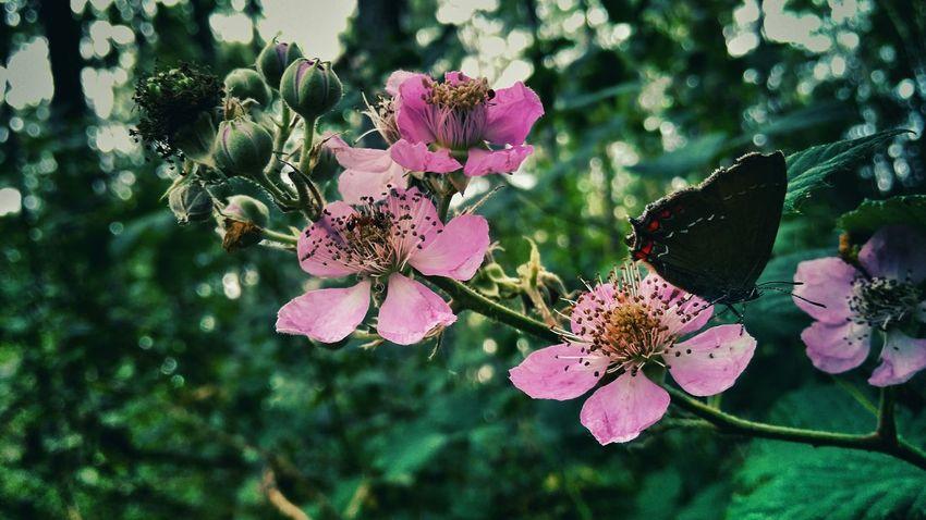 Nature Flower Taking Photos Enjoying Nature Betterfly Forest