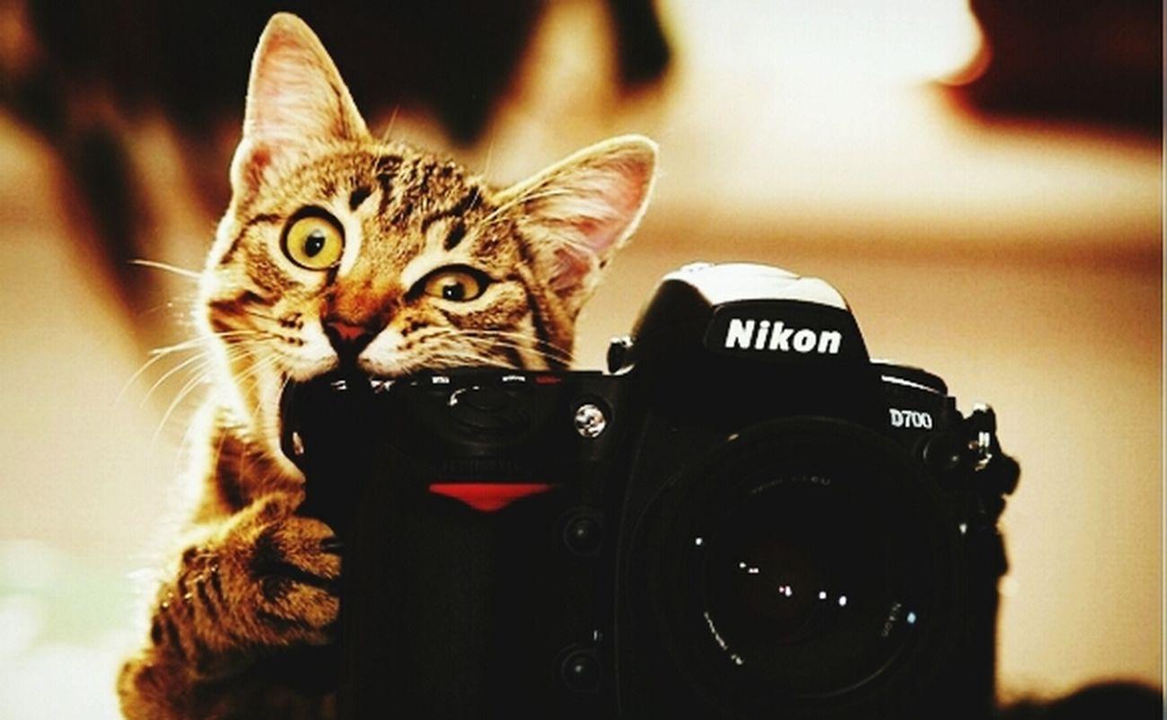pobre New Camara Nikon :C
