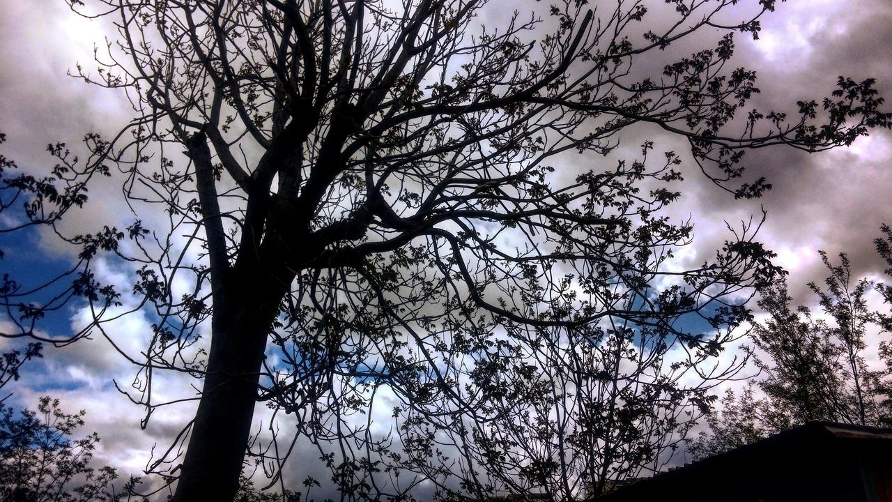 tree, branch, low angle view, beauty in nature, nature, sky, no people, outdoors, day, growth, flower, close-up, freshness