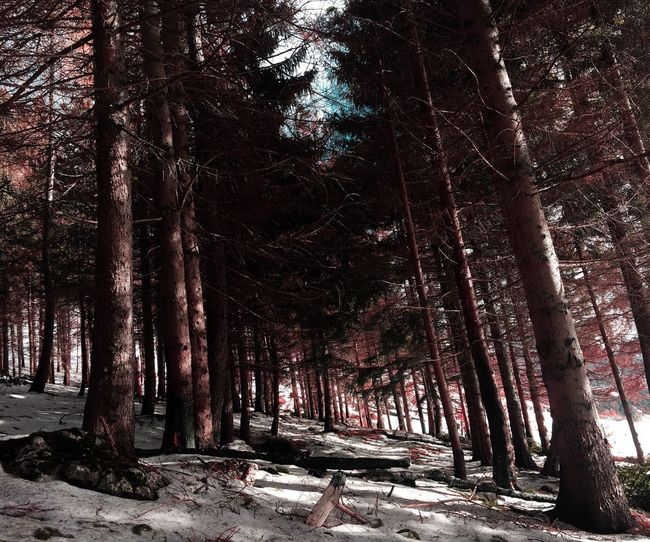Nella selva oscura No People Nature Tree Trunk Tree Branch Outdoors Photooftheday Wild Beauty In Nature EyeEm Nature Lover Sky Travel EyeEm Gallery Travel Photography WoodLand Red Snow Mountain Wintertime Winter Wonderland Climb Darkness And Light Art