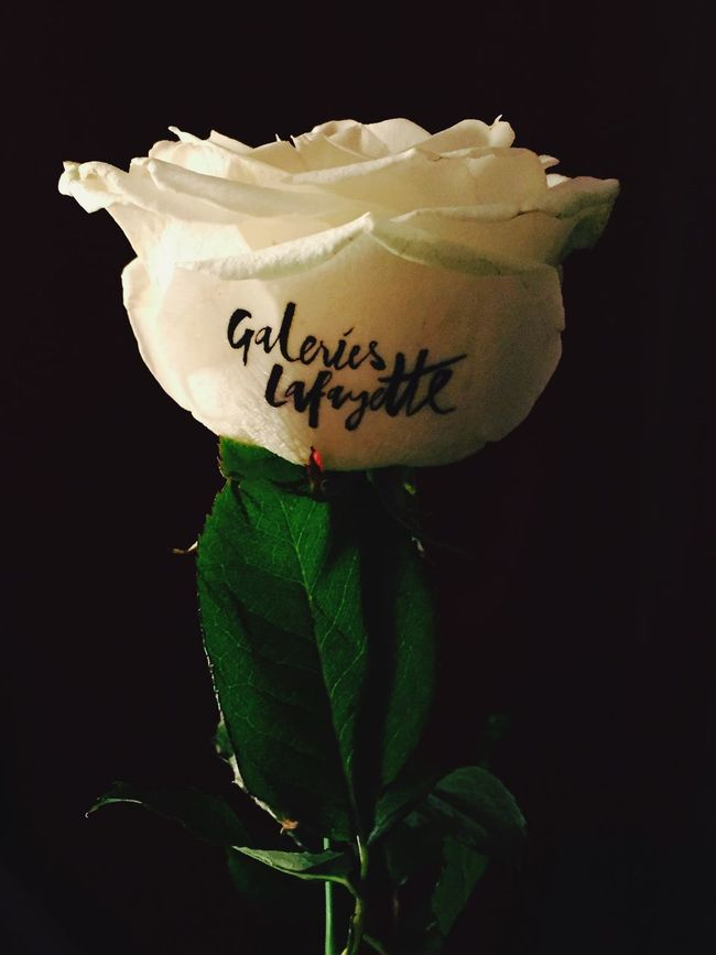 🌹 Roses Flower Paris Galeries Lafayette White