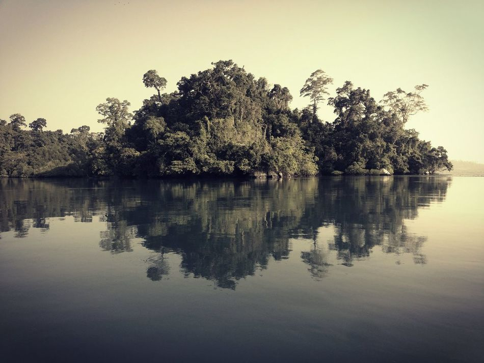 Reflection Lake Nature Outdoors Beauty In Nature Andaman And Nicobar Islands Oneplus3 The Untouched Paradise Enchanting India Nature Photography Oneplusphotography Mangrove Forest Corals Mangroves Tree