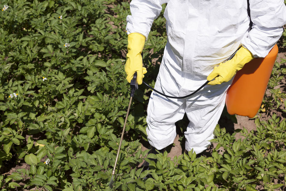 Man spraying toxic pesticides or insecticides in vegetable garden Agriculture Day Farm Farm Life Fertilizer Garden Garden Photography Green Growth Leaf Men Nature Non Organic One Person Outdoors Pesticide Pollution Protective Suit Spraying Vegeteble