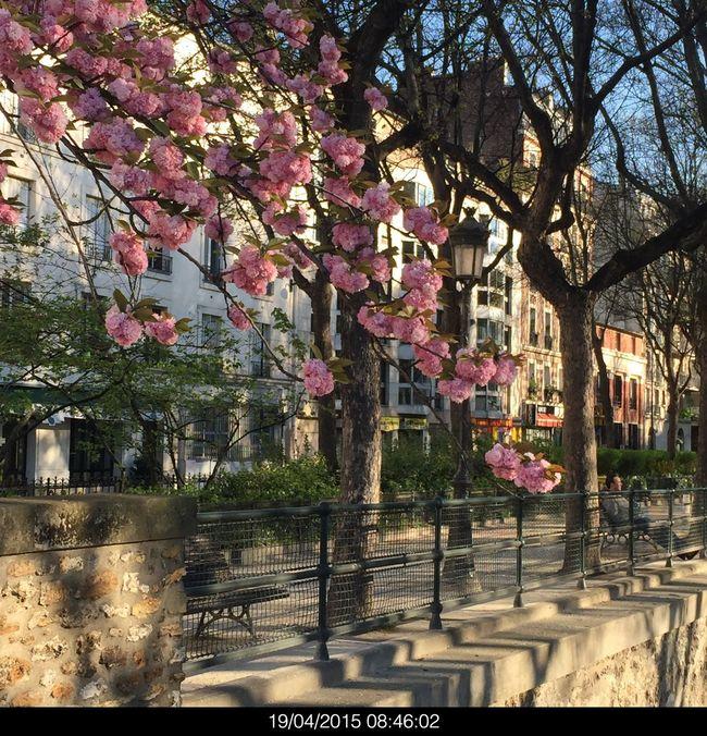 Spring Into Spring Paris Taking Photos Walking Around Paris, France
