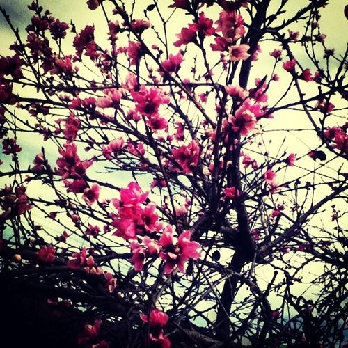 Beauty is in the eye of the beholder!!! Cherry Blossoms