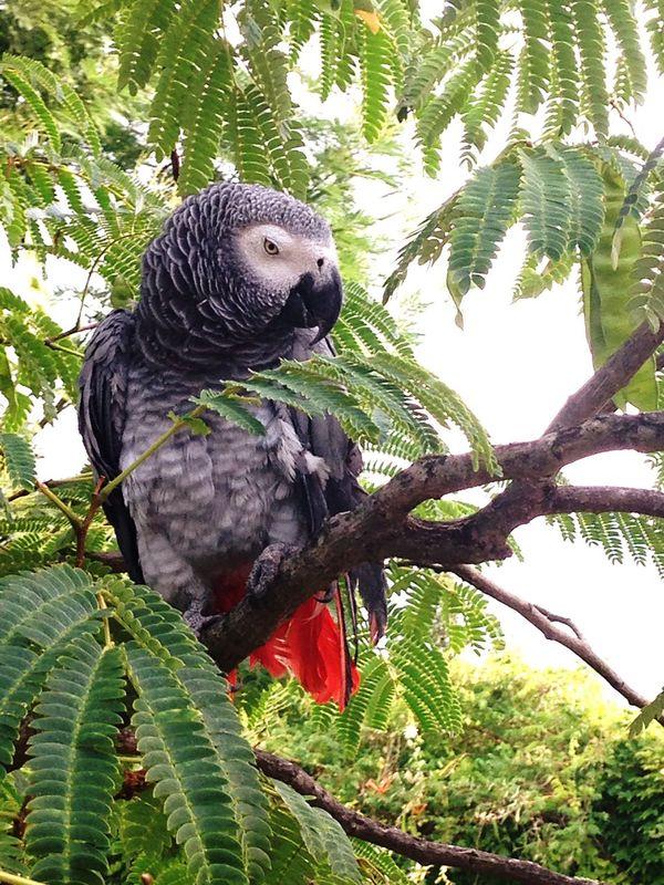 Taking Photos Compagny Bird Photography Like In Jungle Hello World