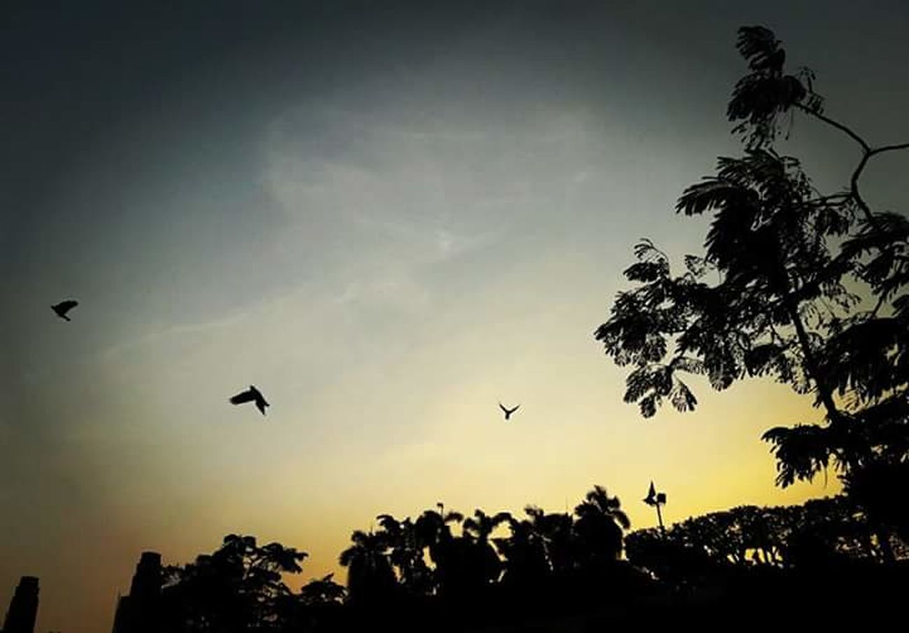 Allah with me I'm not alone. 💛🌼 Flying Silhouette Bird Sky Cloud - Sky Low Angle View Animal Themes Animals In The Wild Nature Sunset No People Beauty In Nature Tree Outdoors Night Hovering Adapted To The City EyeEmNewHere