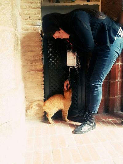 EdcampTunisia Cat♡ El9attoussa Al Mouchai8ba 💞 Good Day :)
