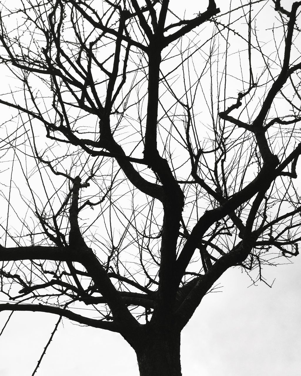 silhouette, bare tree, low angle view, branch, tree, day, outdoors, nature, full length, beauty in nature, sky, no people