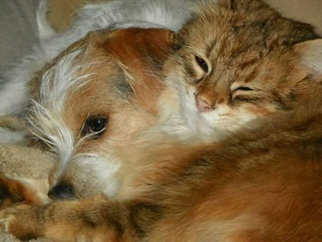 Kittens Puppies Cute Pets Animal Lover Adorable Love My Cat Love My Dog