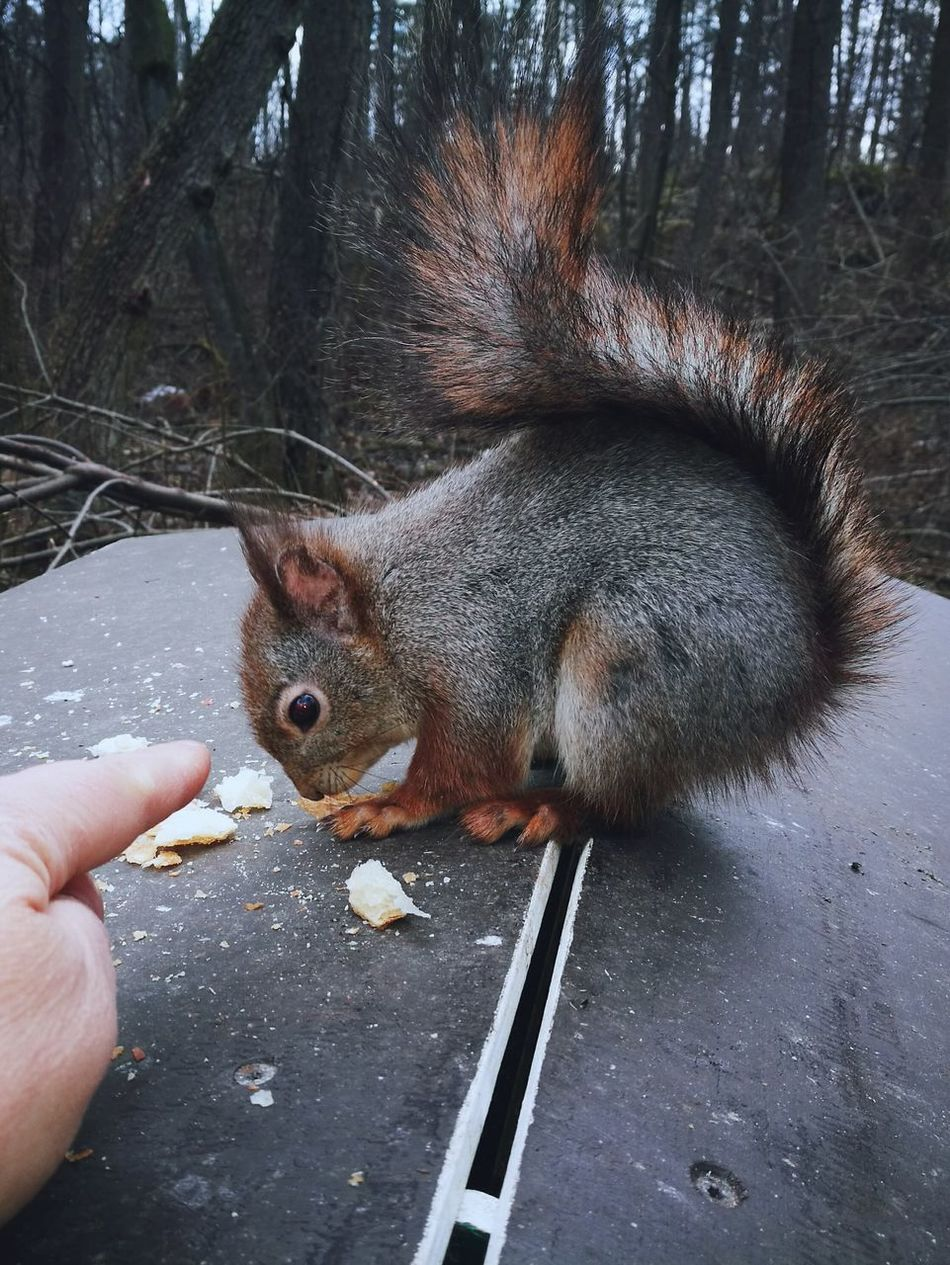 Kotka, Finland Squirrel Nature Friends ❤ HuaweiP9