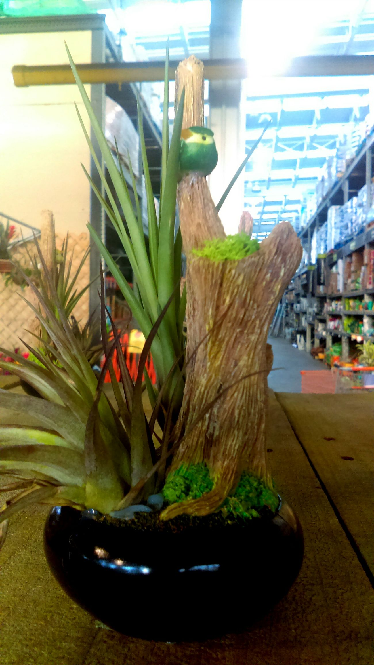 Plant Growth Fakebird Homedepot Bird