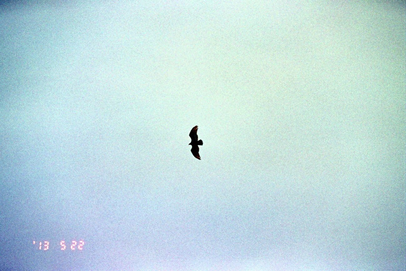 Carmel Highlands Date Stamp Bird Clear Sky Flying No People Silhouette Spread Wings Outdoors Film Olympus Koduckgirl 2013