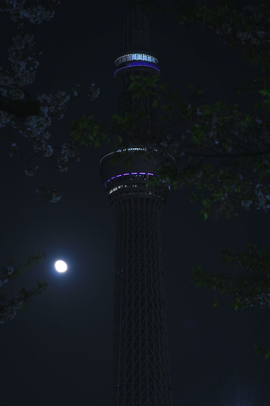 Night Tree Illuminated Tower Tokyoskytree Skytree Moon Nightview Nightscape Nightphotography Lighting Tokyo Cherry Blossom Sakura Blossom Japan Cherry Blossoms Sakura Blossom
