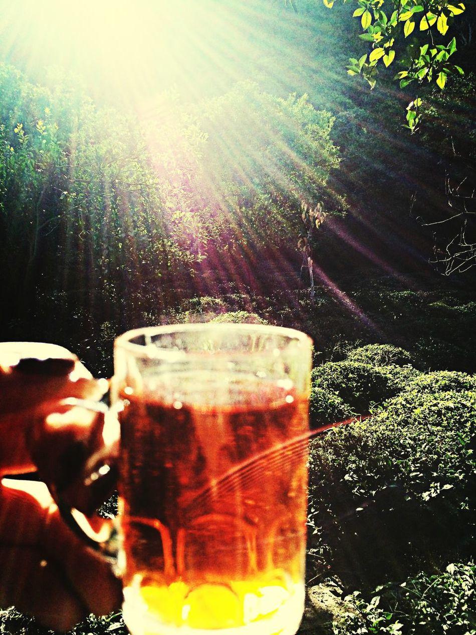 Tea Time Tea Garden Enjoying Life Colorful