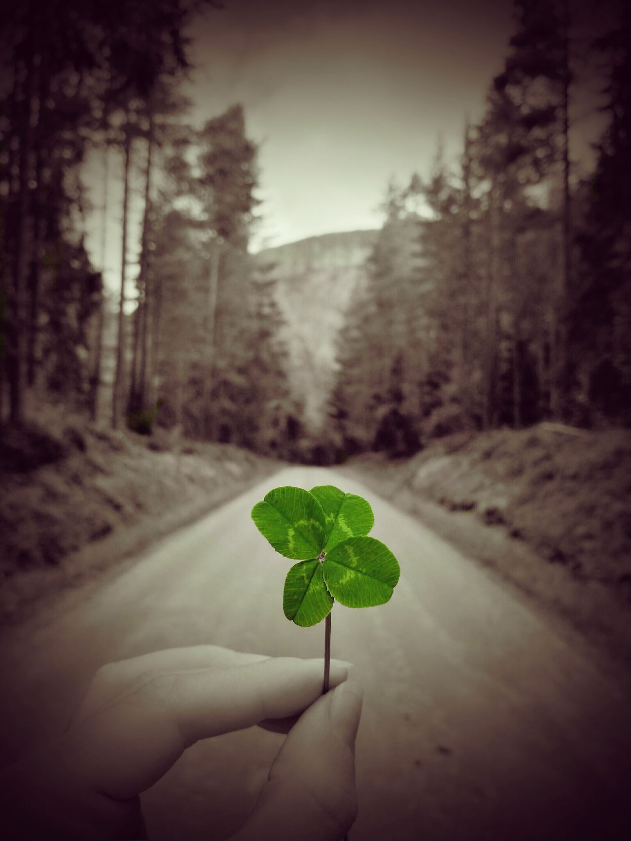 May this beautiful leaf clover shake you all some luck! Leaf Clover Holding Close-up Focus On Foreground Freshness Nature Outdoors Green Color Growth Small Green Lucky Luck Gravel Road Adventures Gravel Roads Gravel Road Firkløver Road Of Luck The Way Forward Fresh On Eyeem
