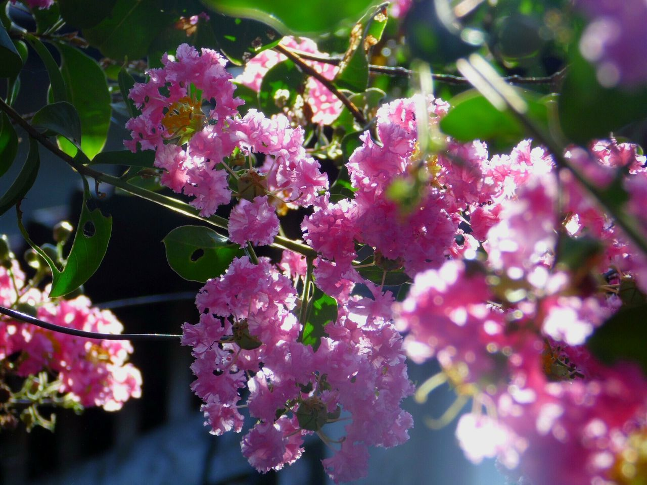 growth, beauty in nature, fragility, flower, nature, freshness, pink color, plant, no people, outdoors, day, tree, close-up, petal, leaf, branch, springtime, blooming, flower head