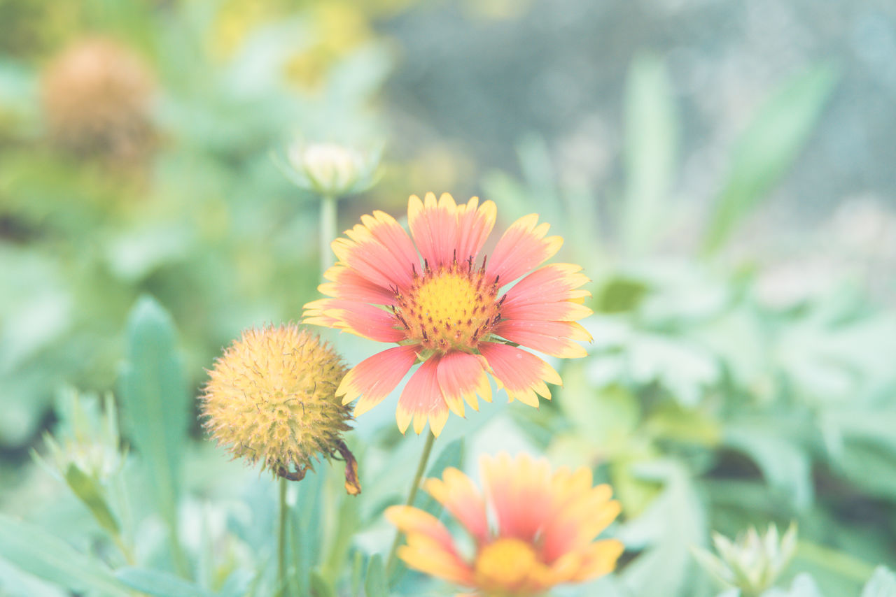 flower, flower head, beauty in nature, fragility, nature, petal, freshness, growth, yellow, no people, plant, outdoors, day, close-up, blooming