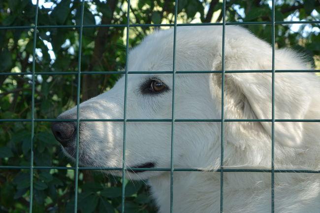 Dramatic Angles Animal Themes Dog Dogslife Cuddle Cuddle Time Dog Waiting
