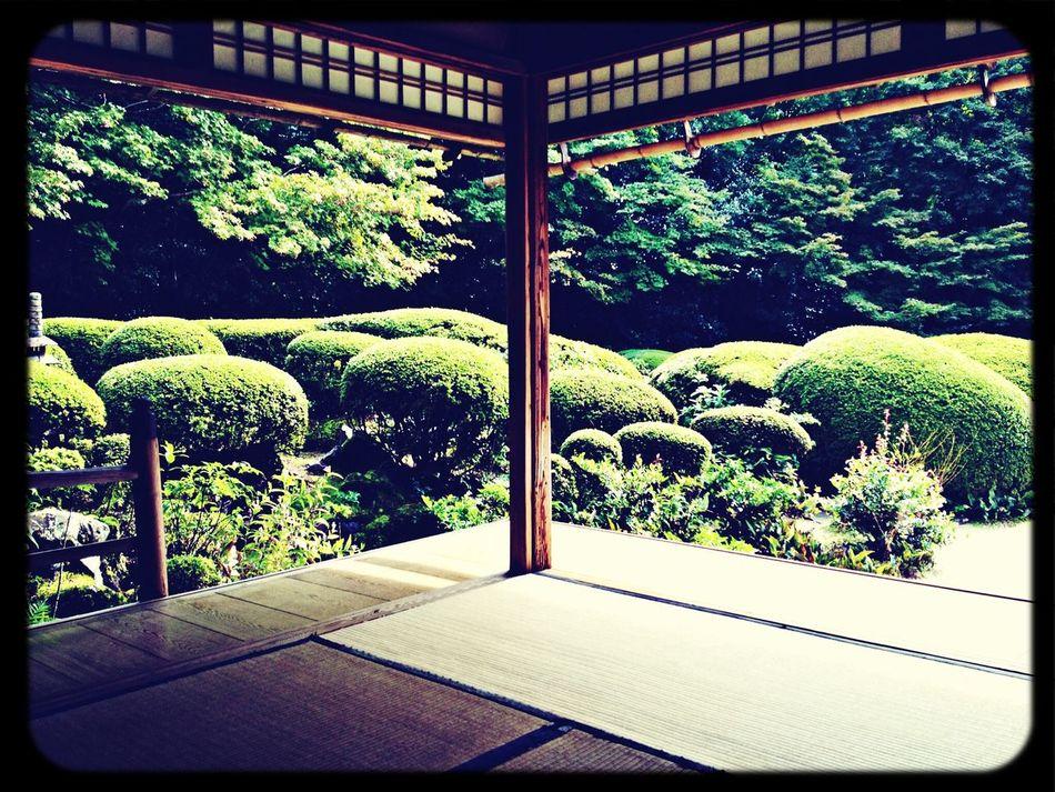 Temple Japanese Garden Japanese Style Plants
