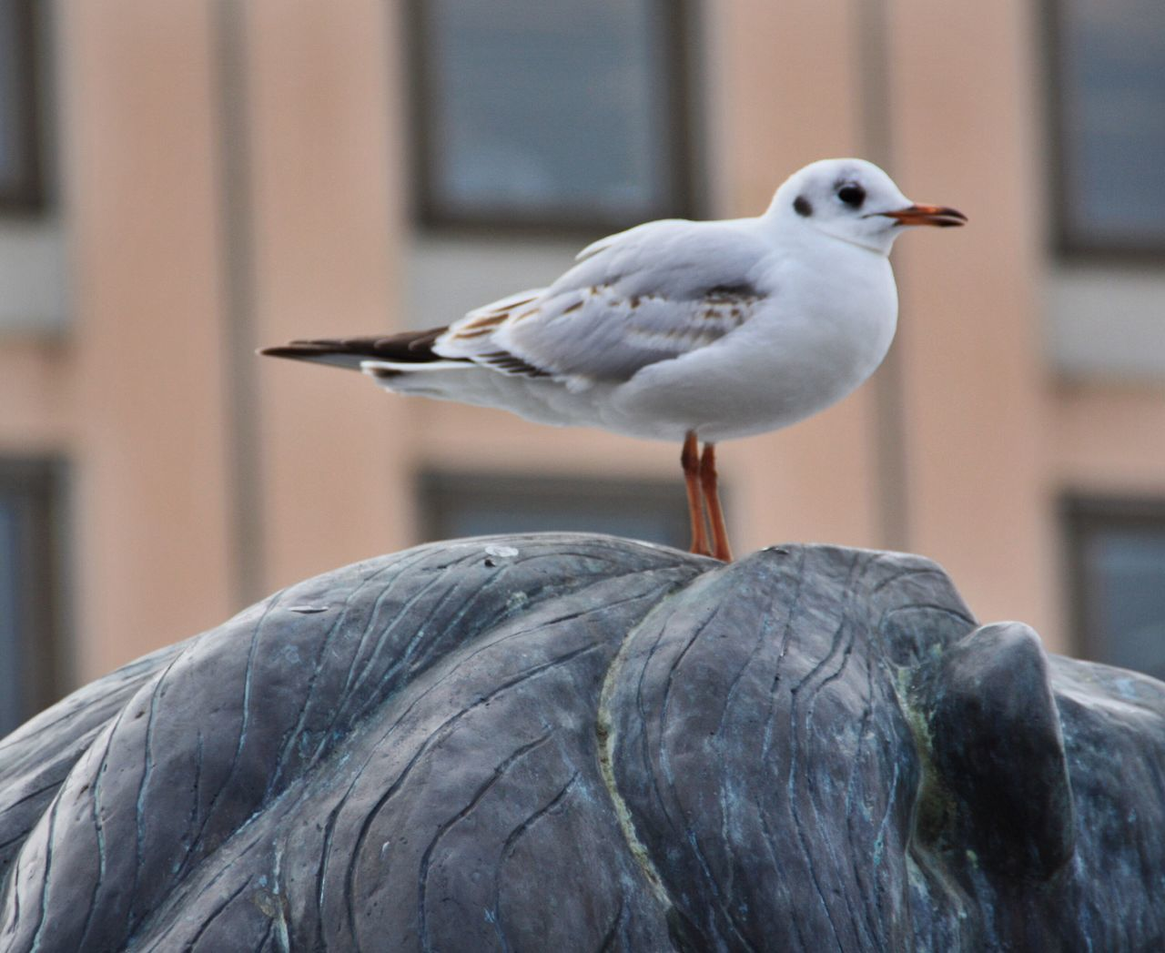 Close-Up Of Seagull Perching On Statue Against Building
