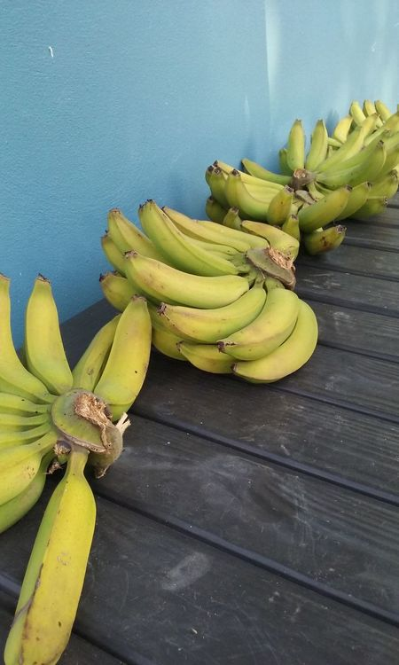 Bananas Yellow Blue Riping Growing In The Yard Garden Homemade Food Colorful Florida Grown. 43 Golden Moments Florida Yellow Color Simple Photography Fine Art Photography
