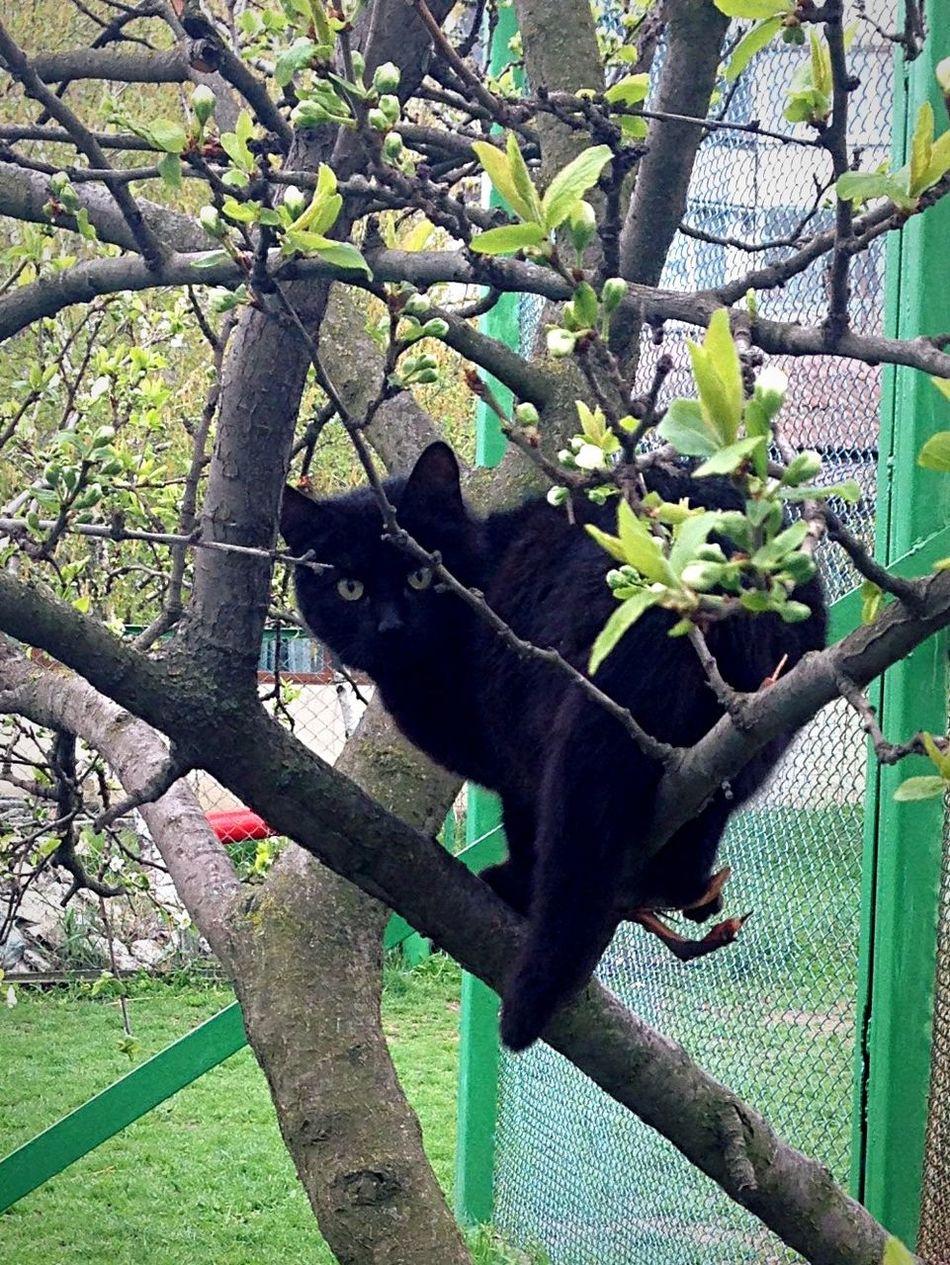 Котик Коты котэ кот Cats Of EyeEm Cats 🐱 Cat Lovers Cat♡ Cat Cats Homeless Cats 🐈Люська