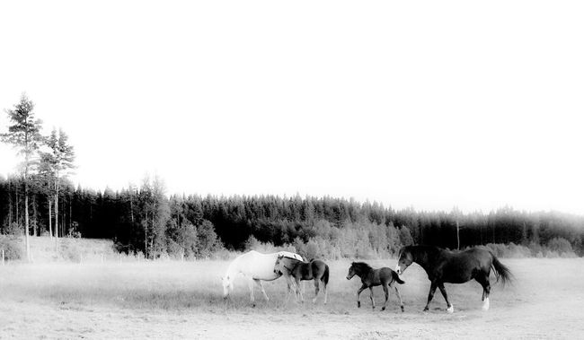 Blackandwhite Sweet Little Horses Days In June Heartbeat Moments