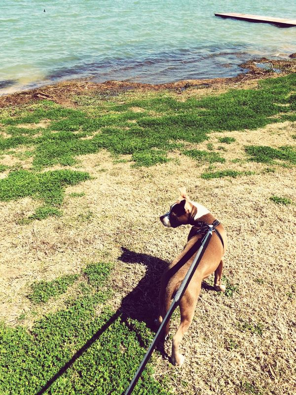 Beautiful walk with my furbaby! Pitty ❤ Lake Pflugerville Gorgeous