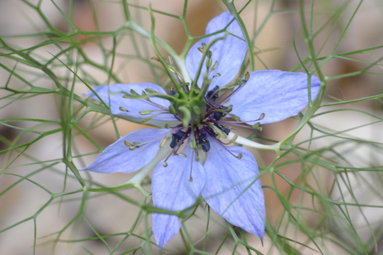 Nature On Your Doorstep MyBackGarden