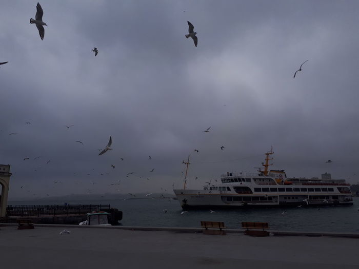 Flying Bird Flock Of Birds Large Group Of Animals Animals In The Wild Seagull Sea