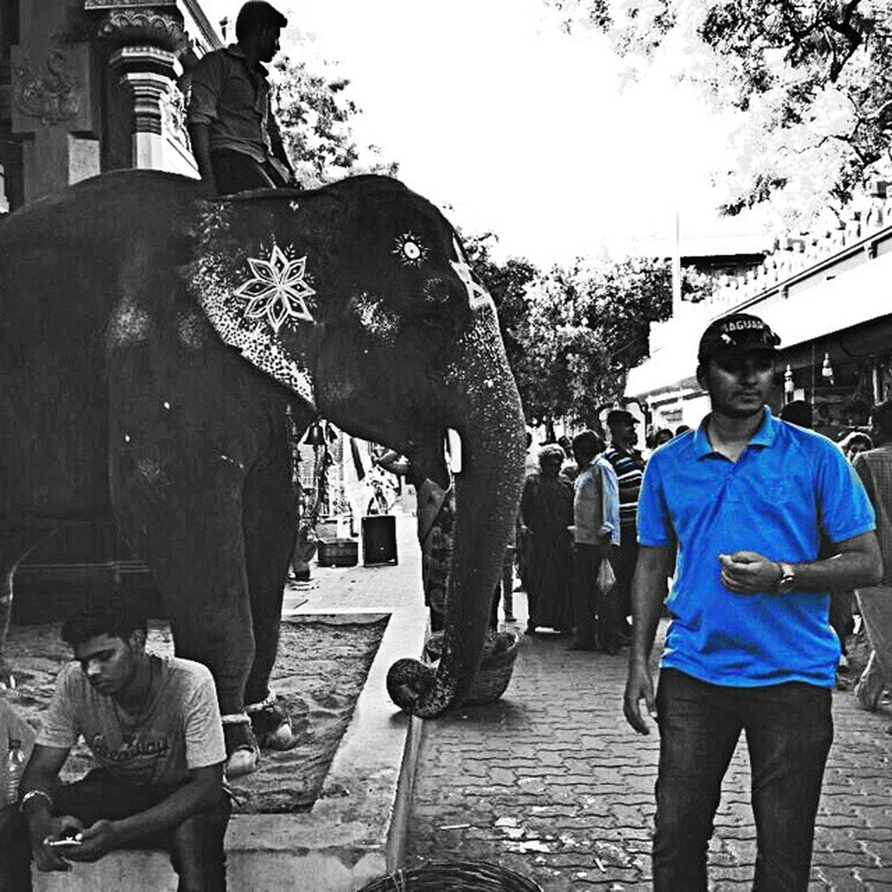 Pondicherry Pondybeaches Animalover _oye _cic _soi Streetphotography Bnw_india Blackandwhite F4F Followforfollow Follow4follow Blessings Elephants